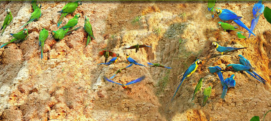 Amazon rainforest wallpaper birds